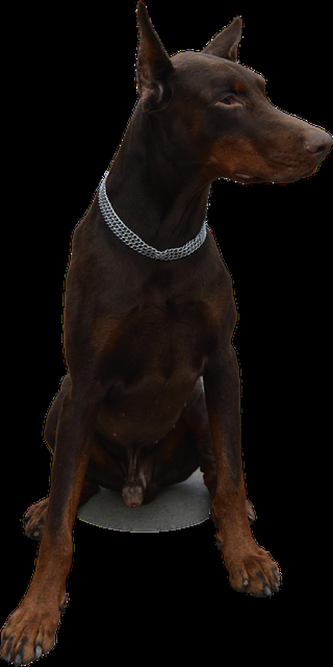 Guard Dog Practical Home Security Tips Toronto